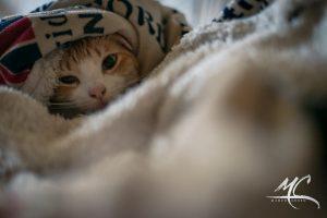 Un bel gattino che vi scalda sotto il piumone ed un buon libro...cosa si vuole di più? Foto